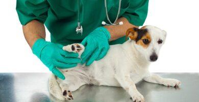 clínica veterinaria dermatología